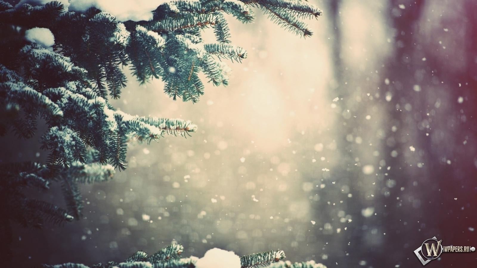 Зимний лес 1600x900