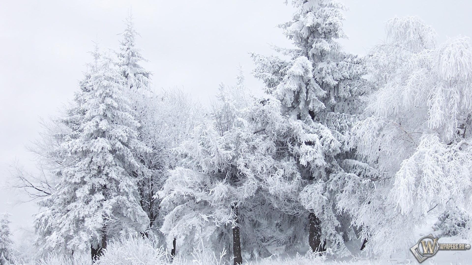 Картинки зима на рабочий стол разрешение 1920х1080