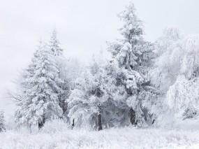 Обои Зимний лес: Зима, Снег, Лес, Деревья, Белый, Зима