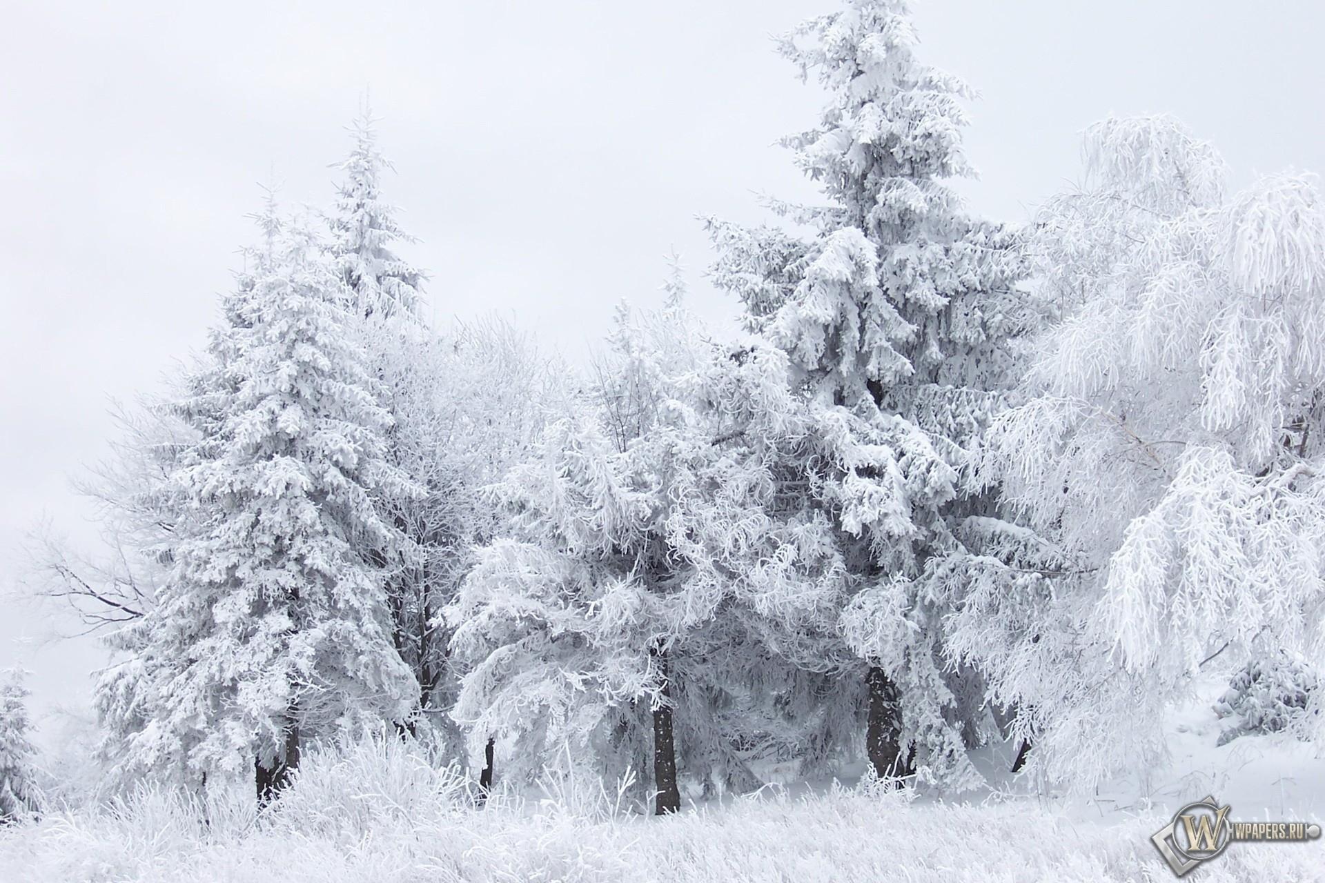 Обои зимний лес зима снег лес
