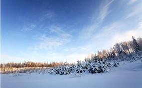 Обои Зимнее небо: Зима, Снег, Лес, Деревья, Небо, Зима