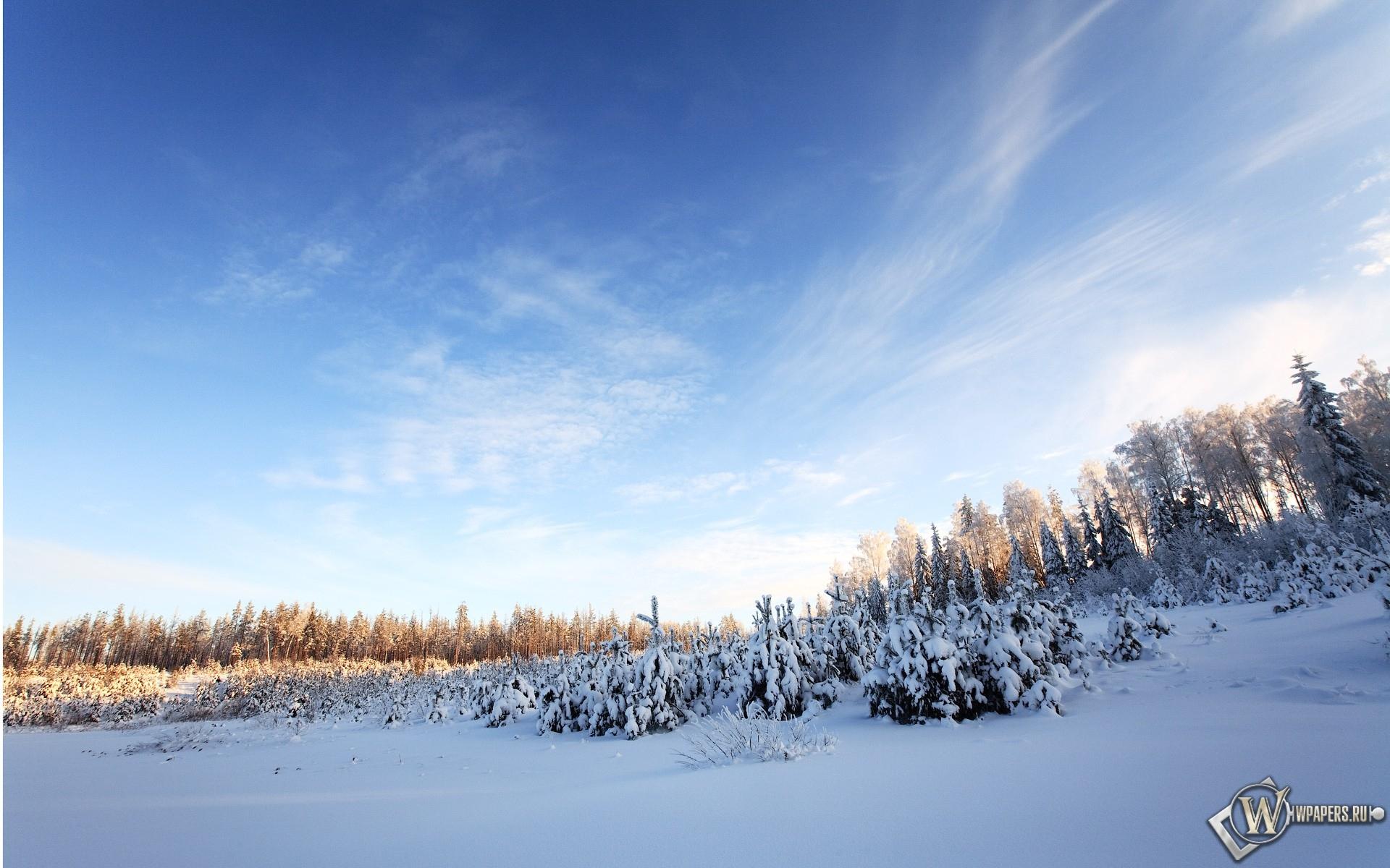 Небо зима снег лес деревья небо