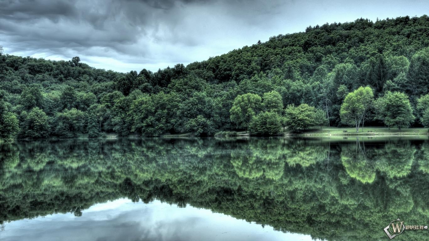 Обои лес у озера отражение вода лес