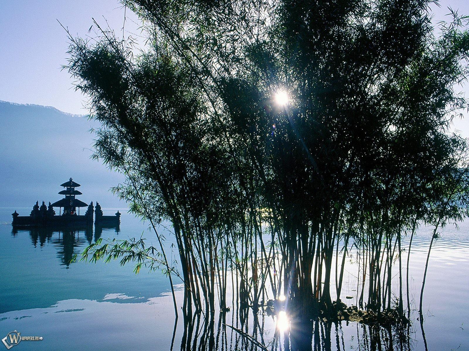 Солнце за кустарником в воде 1600x1200