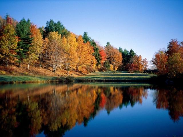 Отражение леса в речной глади