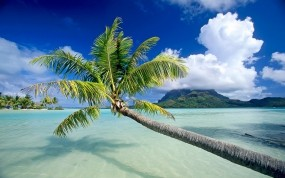 Обои Bora Bora: Пляж, Вода, Песок, Остров, Пальма, Небо, Вода и небо