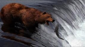 Обои 3D Медведь: Медведь, Рыба, 3D Графика