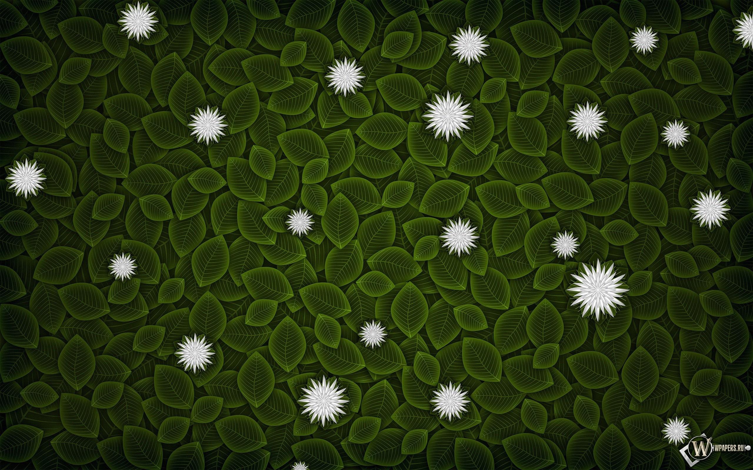 Цветы на листве 2560x1600