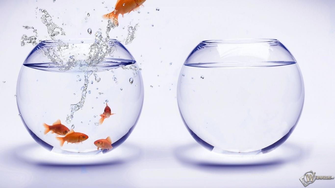 Побег из аквариума 1366x768