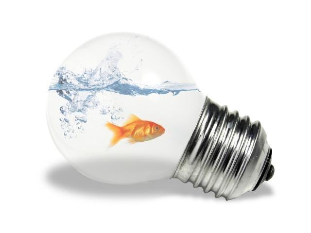 Рыбка в лампочке