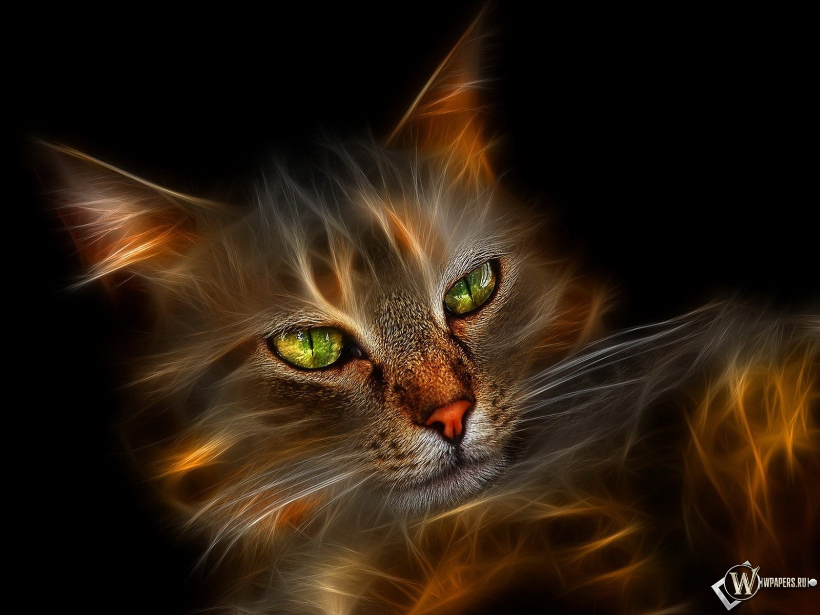 Огненный кот 1600x1200