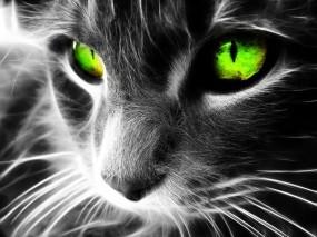 Обои Неоновая кошка: Неон, 3D графика, Кошка, Аэрография, Рендеринг
