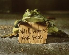 Обои Работать за еду: Текст, Плакат, Лягушка, Надпись, Разное