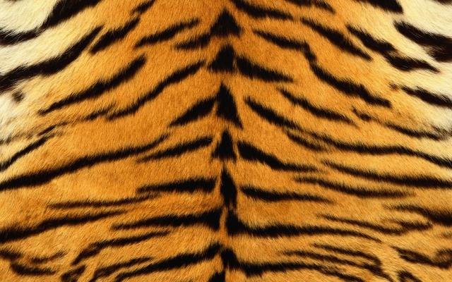 Шкура тигра
