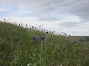 Обои В степях Забайкалья: Поле, Небо, Цветы, Разное
