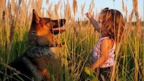 Обои Девочка и овчарка: Поле, Собака, Ребёнок, Разное