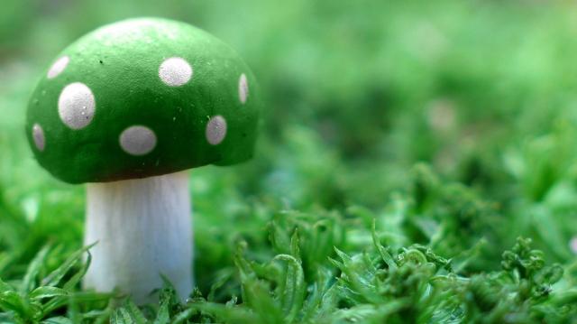 Зеленый Мухомор