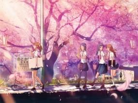 Обои Цветущая сакура: Сакура, Cherry blossom, школьницы, Аниме