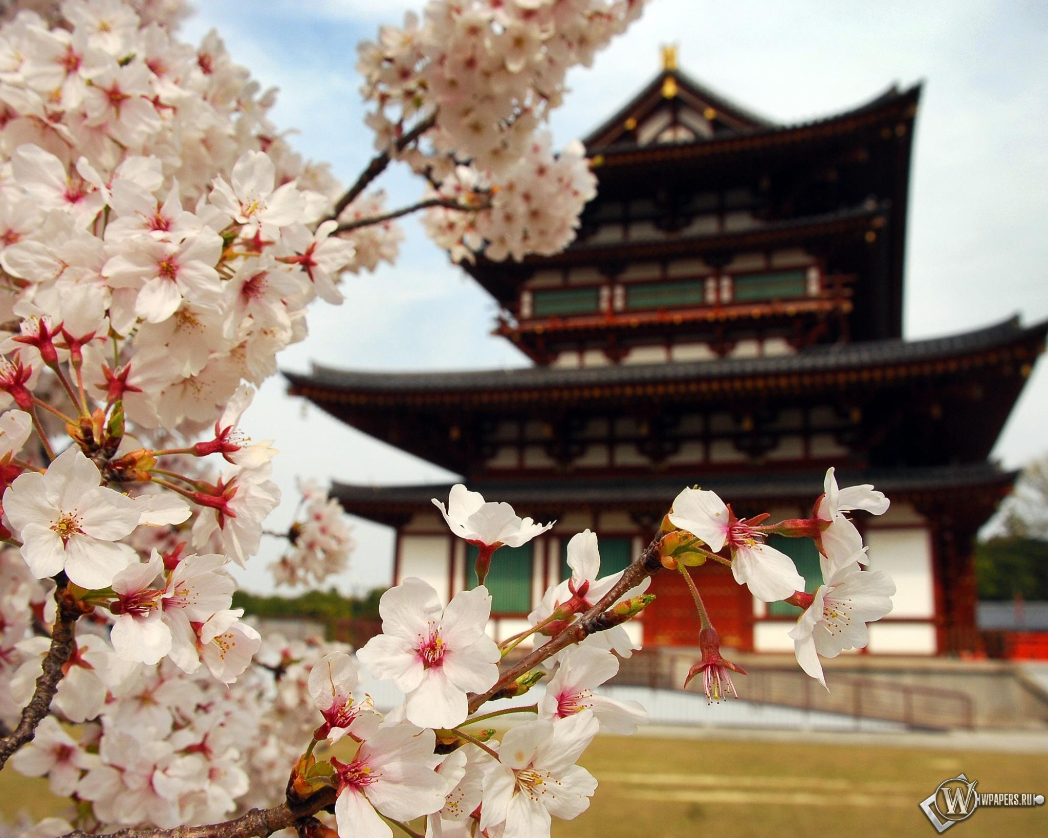 Пагода в Японии 2048x1638