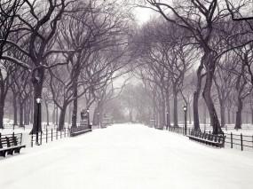 Обои Центральный парк Нью-Йорк: Зима, Снег, Город, Аллея, Города