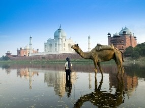 Обои Yamuna River Agra Uttar Pradesh - India: Индия, Тадж-Махал, Верблюд, Прочие города