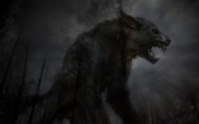 Обои Чёрный волк: Лес, Ночь, Оборотень, Фэнтези