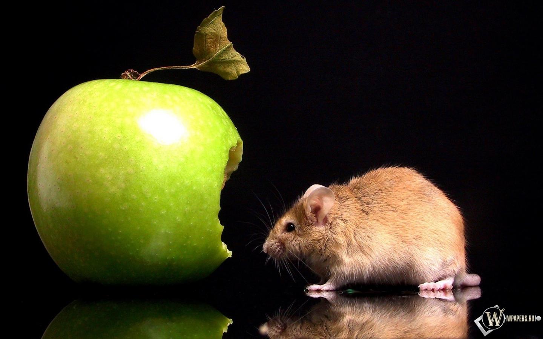 Мышка с яблоком 1440x900