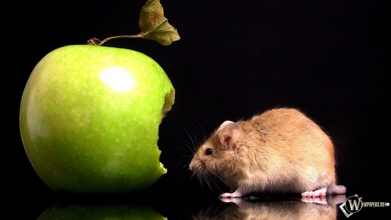 Мышка с яблоком 1600x900