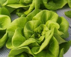Обои Зелёный салат: Зелёный, Салат, Еда