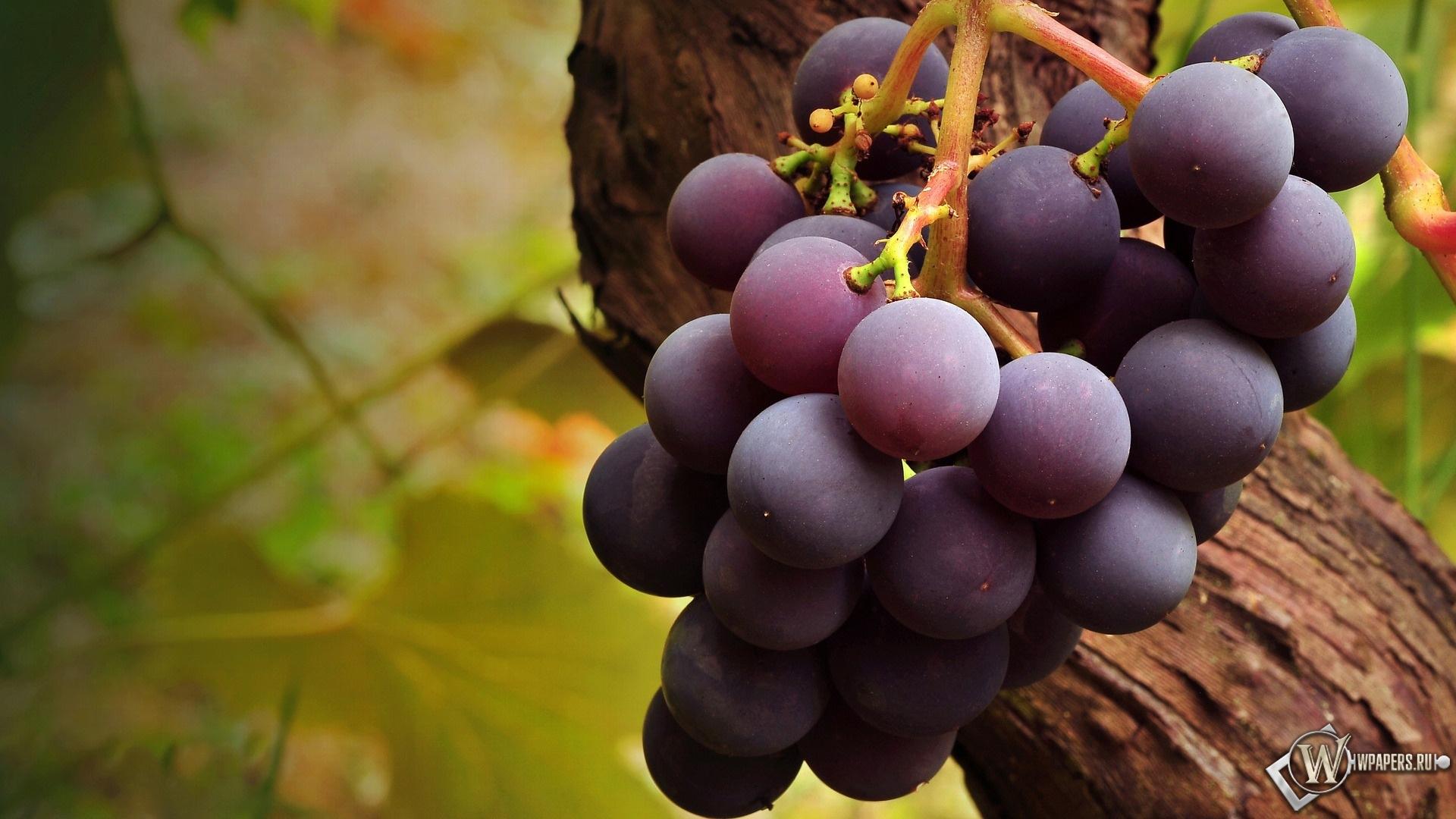 Вкусный виноград 1920x1080