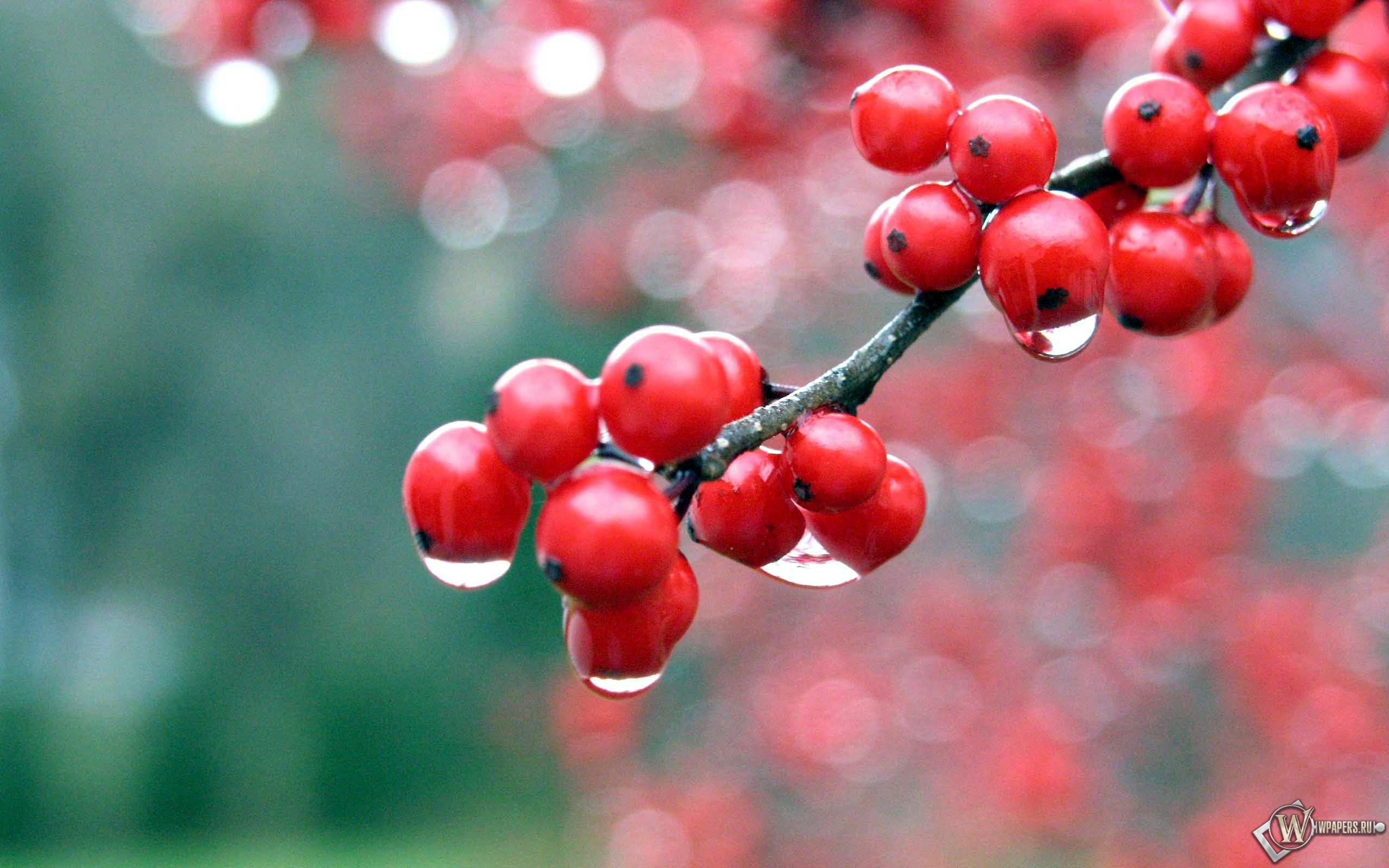 Красные ягоды 2560x1600