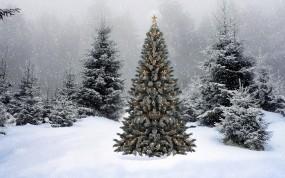 Обои Новогодняя ёлка: Снег, Ель, Новый год, Елка, Новый год