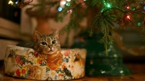 Кот и Новый год