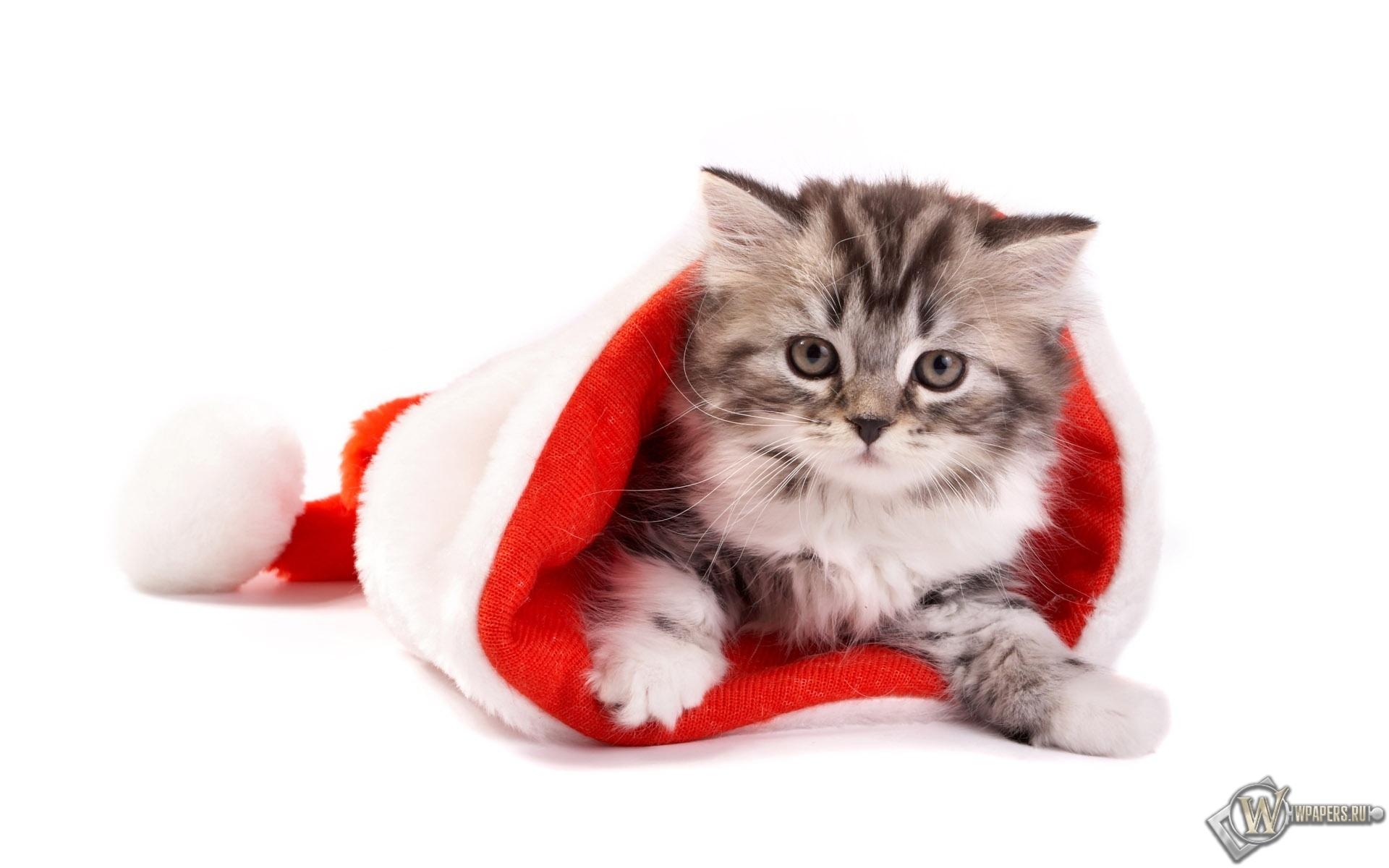 Котёнок в шапке 1920x1200