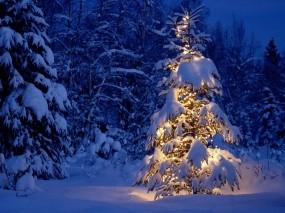 Обои Елка в снежном лесу: Зима, Снег, Лес, Новый год, Елка, Новый год