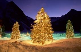 Обои Горящие ели: Зима, Свет, Ночь, Елка, Подсветка, Новый год