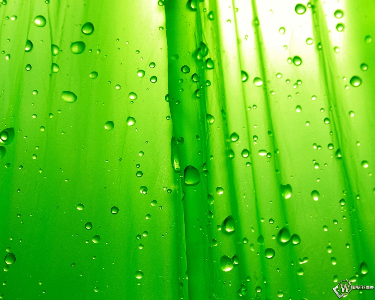 Зелёный фон 1280x1024