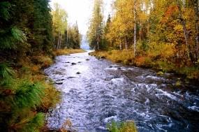 Обои Лесной ручей: Лес, Ручей, Вода