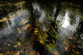 Водоросли в воде