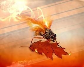 Обои Огненная муха: Огонь, Лист, Муха, Насекомые
