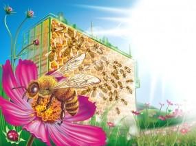 Обои Пчелиные соты: Соты, Цветы, Пчела, Насекомые
