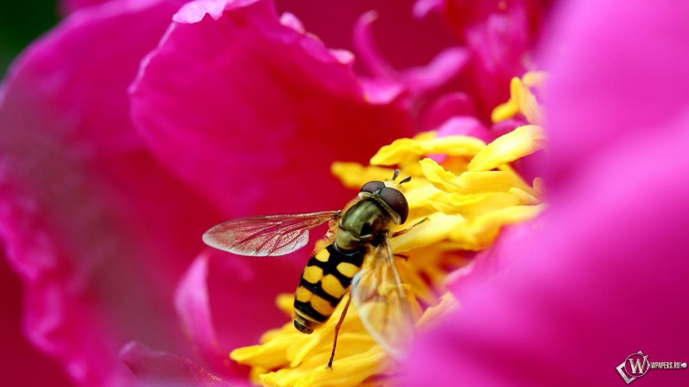 Пчела на цветке 1366x768