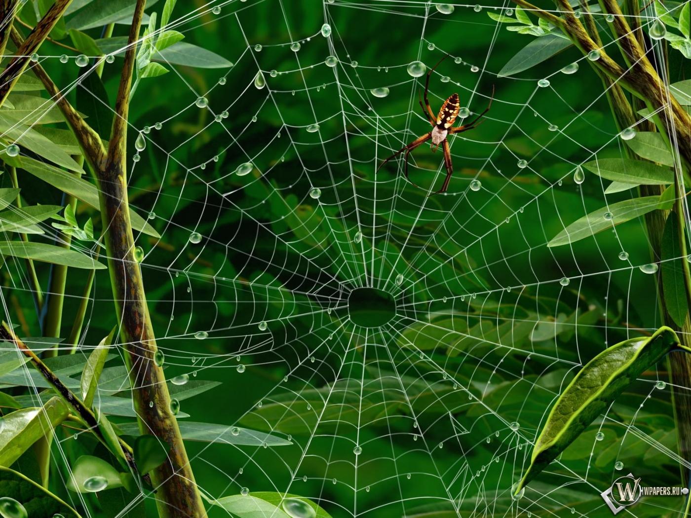Паук на паутине 1400x1050