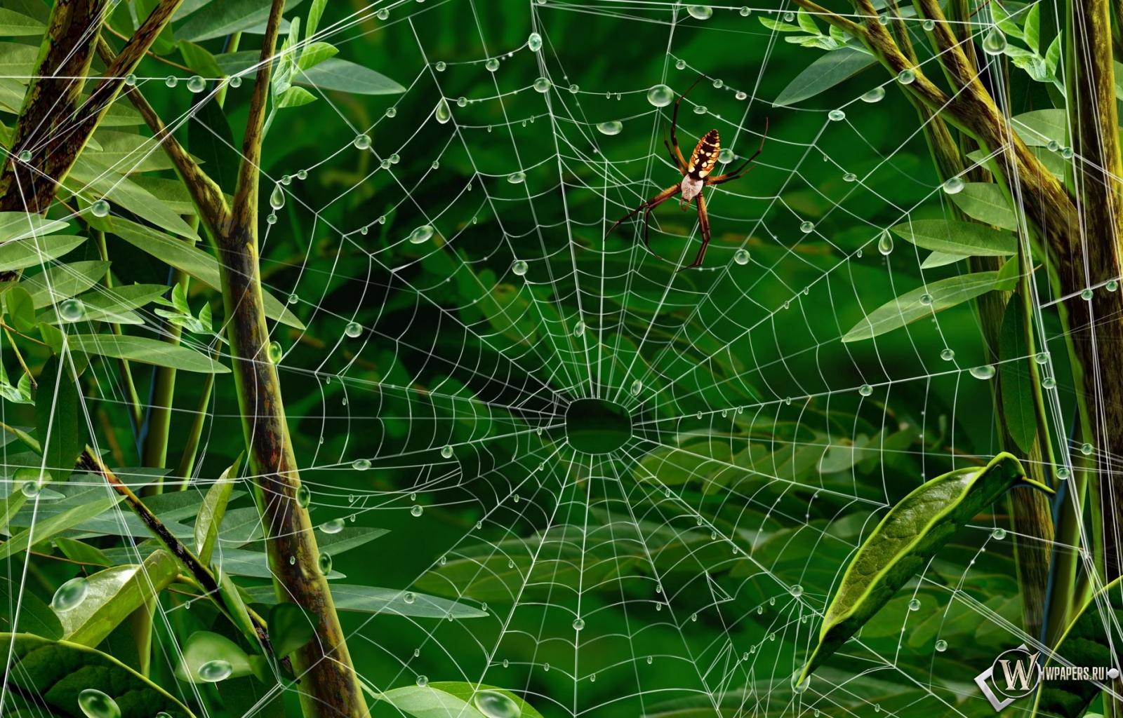 Паук на паутине 1600x1024