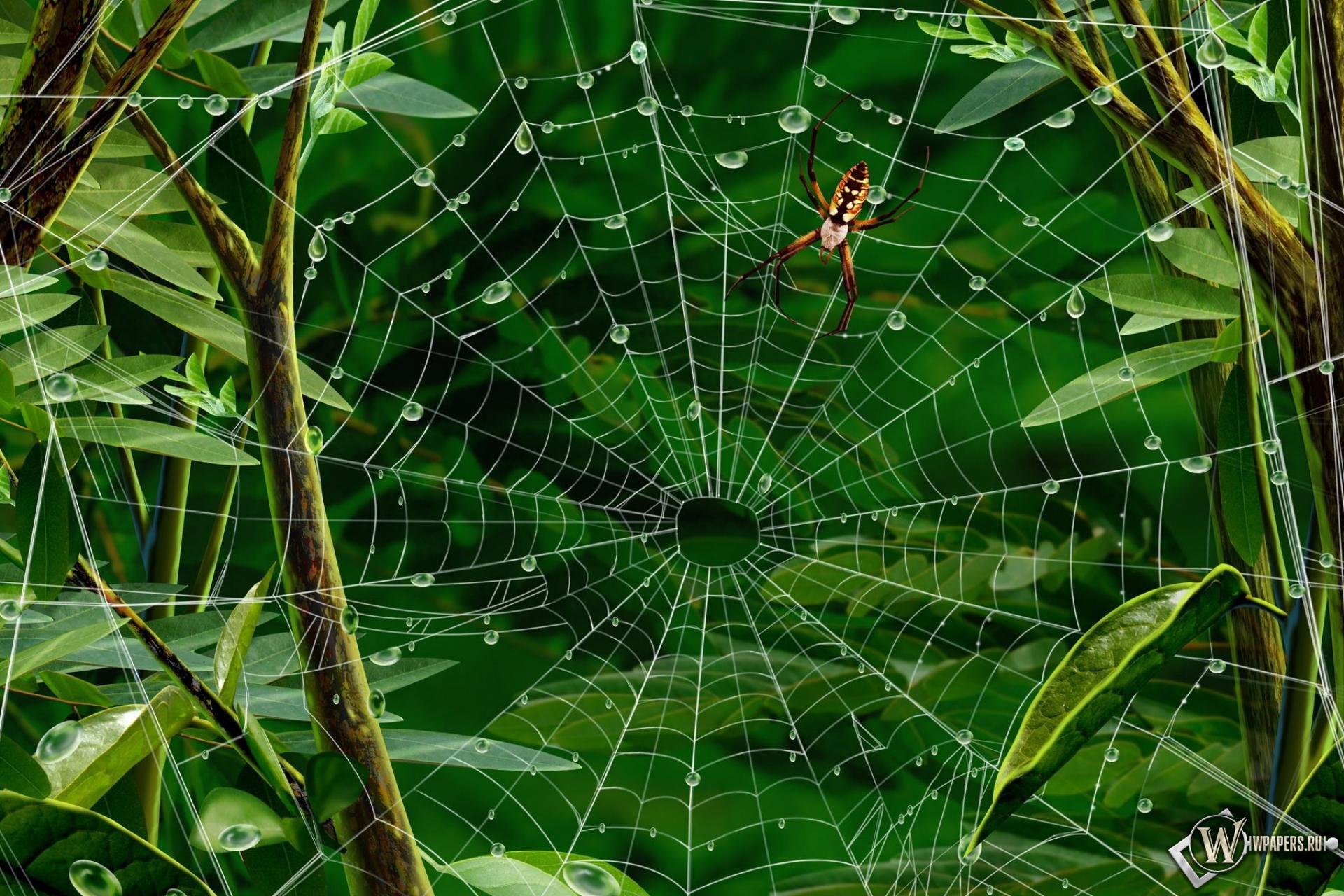 Паук на паутине 1920x1280