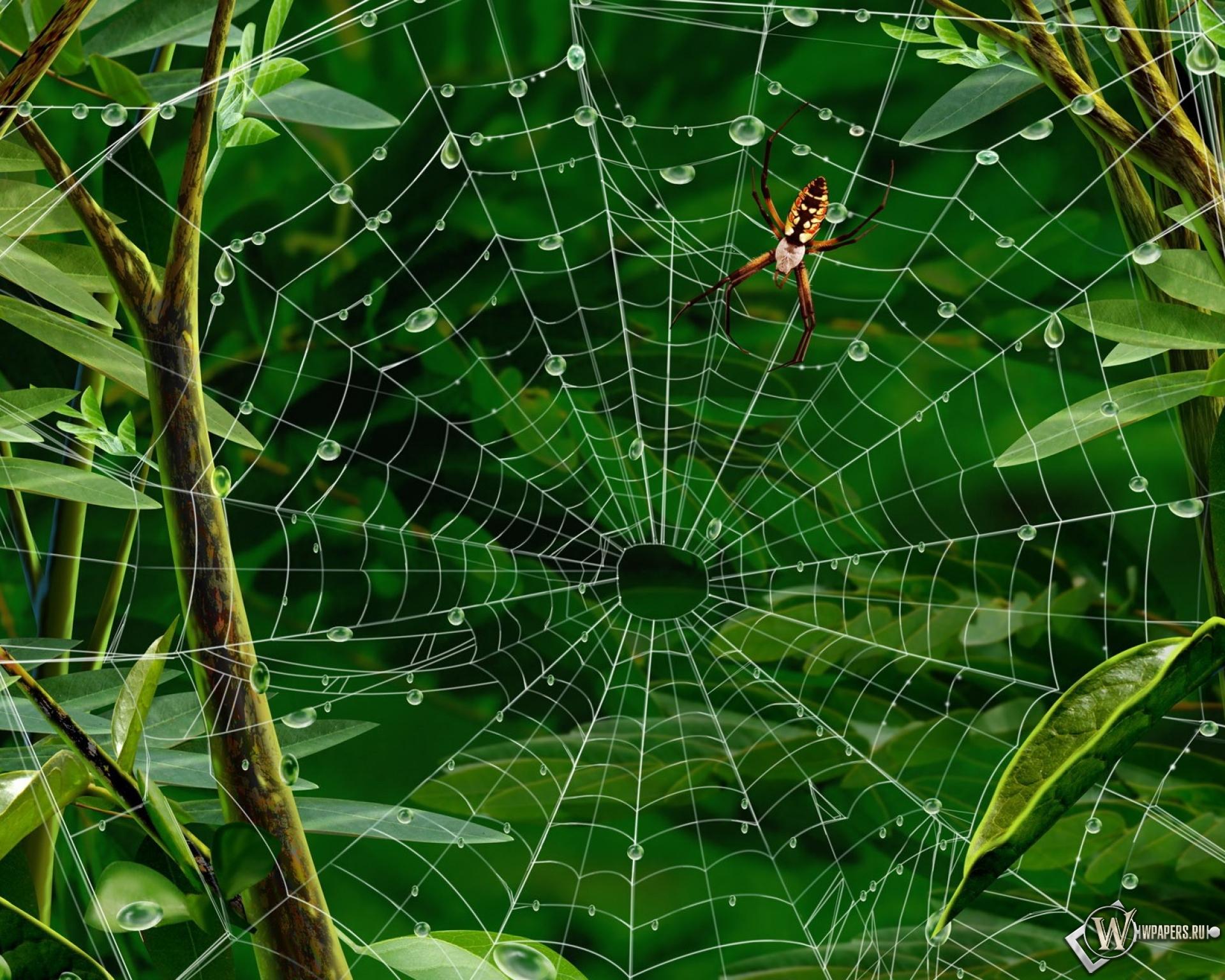 Паук на паутине 1920x1536