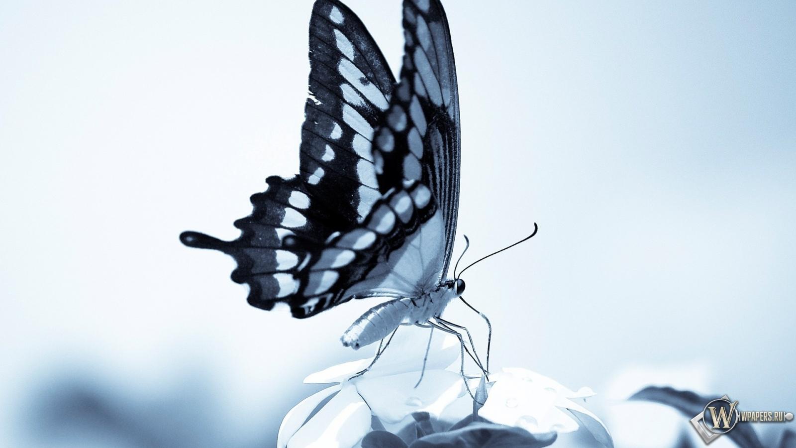 Обои бабочка цветы на рабочий стол 288302