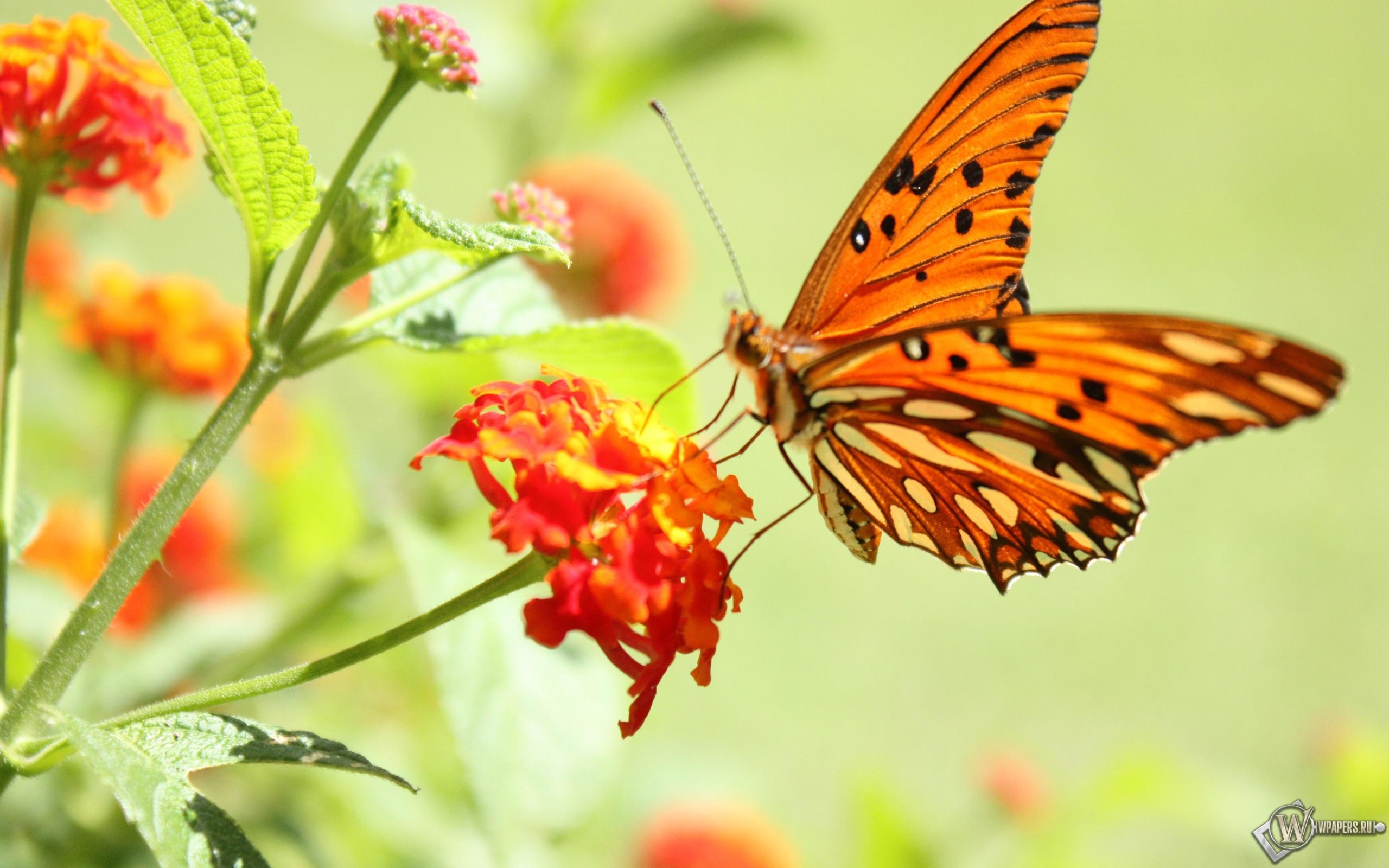 Бабочка на цветке 2560x1600