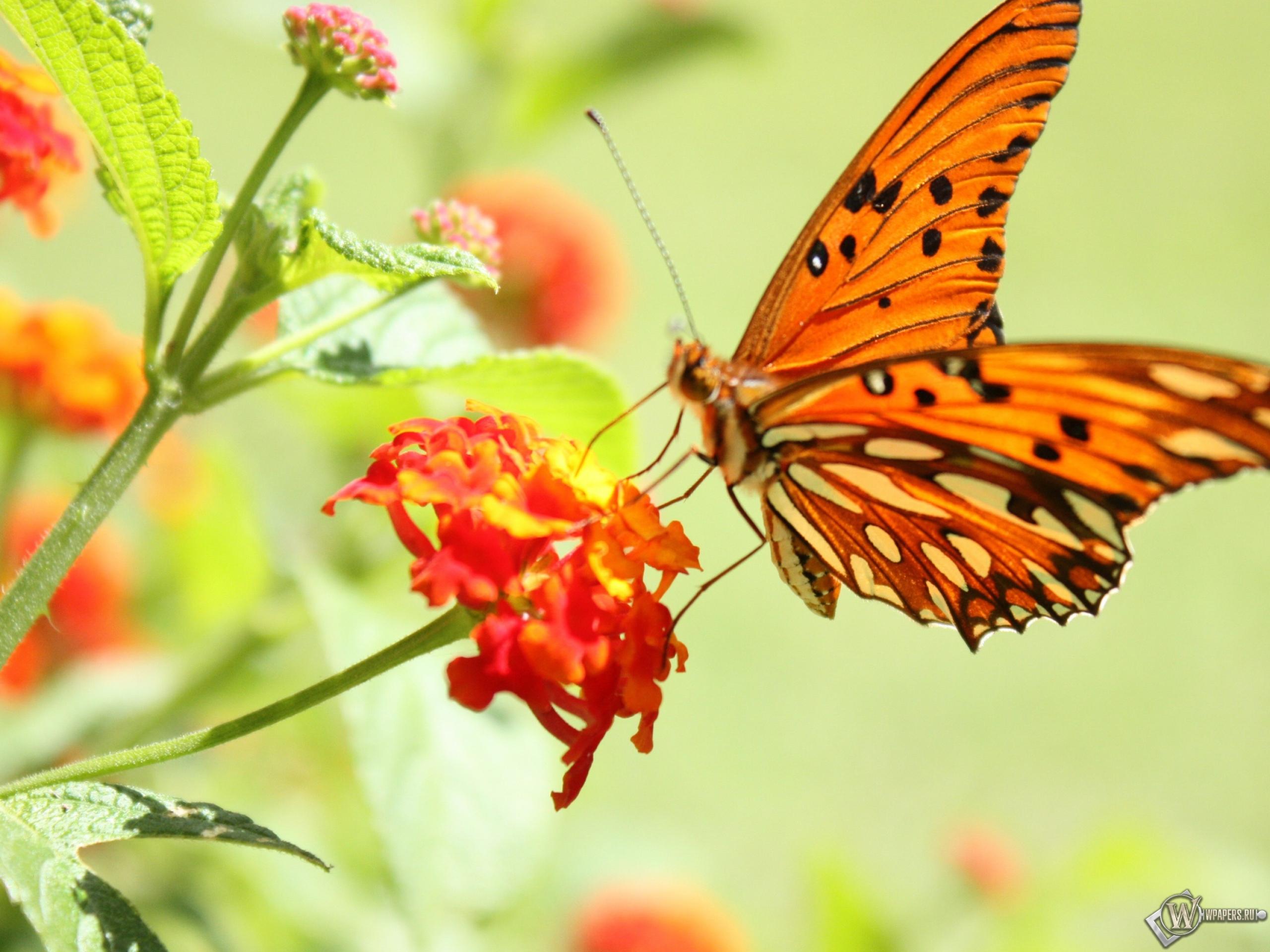 Бабочка на цветке 2560x1920