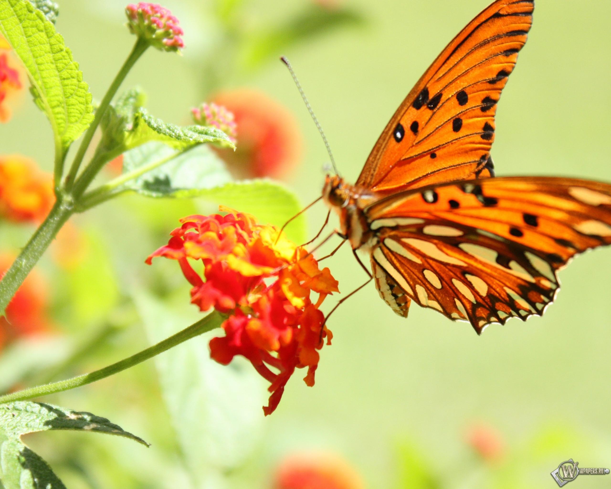 Бабочка на цветке 2560x2048